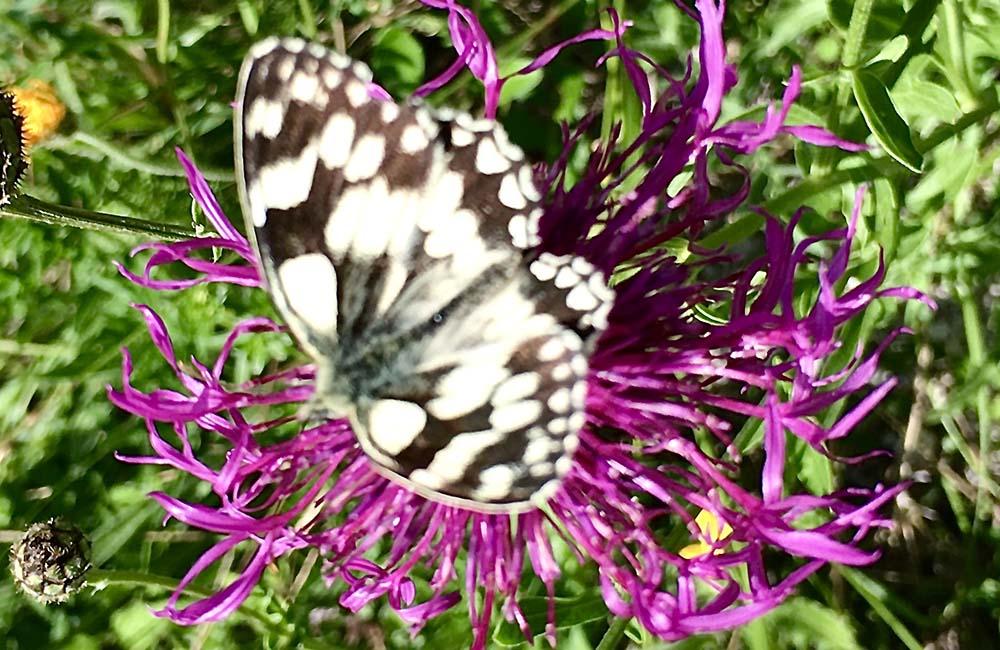 Image of butterfly on flower at Lullingstone World Garden